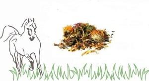 haystack logo kruiden
